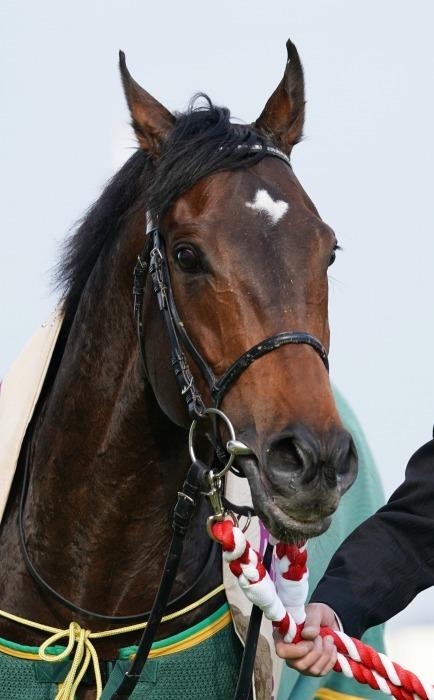 現役最強馬の1頭サートゥルナーリアが出走、第56回金鯱賞 GⅡ_b0173867_21202420.jpg