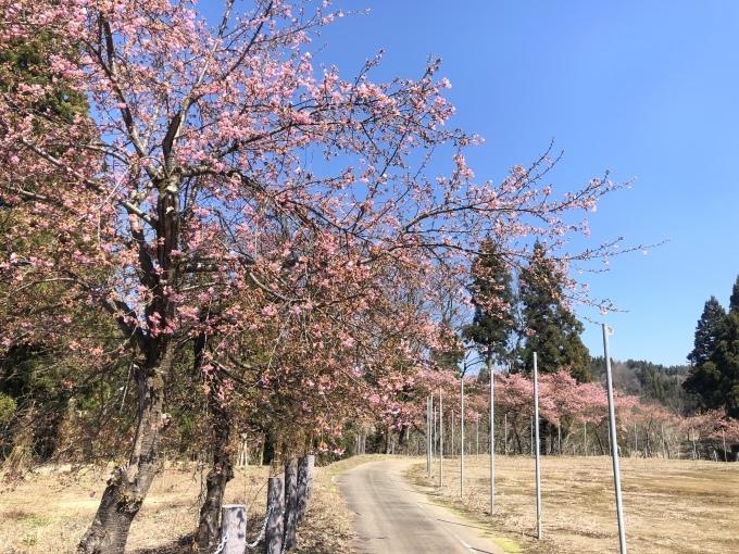 河津桜の季節_d0182179_13424997.jpeg