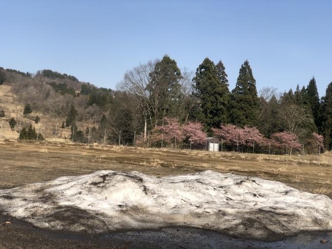 河津桜の季節_d0182179_18125272.jpeg