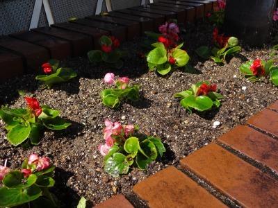 ガーデンふ頭総合案内所前花壇の植替えR2.3.16_d0338682_11035310.jpg