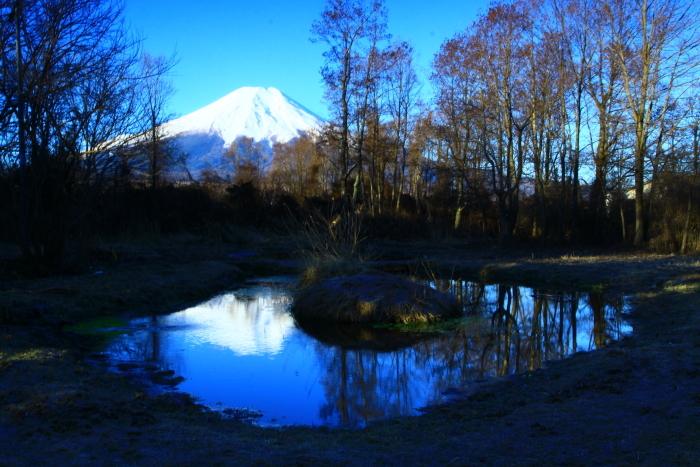 令和2年3月の富士 (9) ドジョウ池と富士_e0344396_16322680.jpg