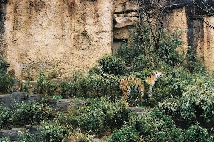 3/2 多摩動物公園③ 2枚_b0016600_23301258.jpg