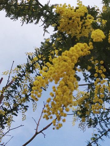 春分*:L\'équinoxe de printemps !_f0038600_14391841.jpg