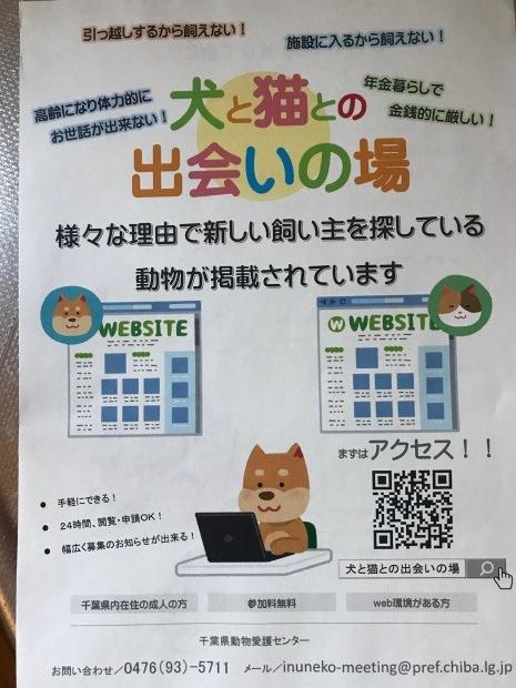 動物愛護センター「犬と猫との出会いの場」_f0242002_19341017.jpg