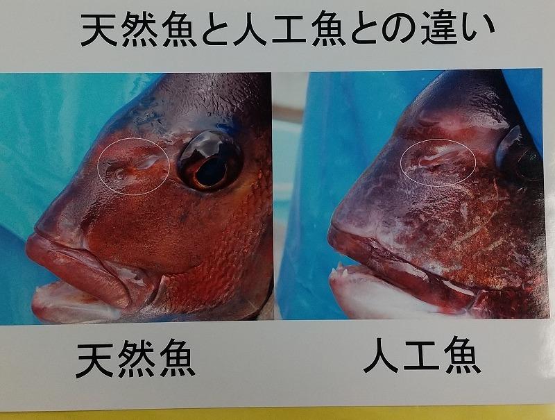 静岡県温水利用研究センター!_d0050503_10424457.jpg