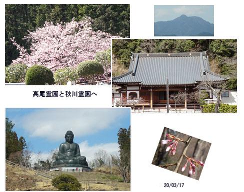 桜咲いた・孫達の帰国・墓参り_c0051105_17135848.jpg
