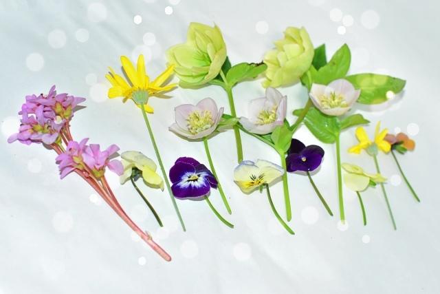 花壇のお花で。_e0413711_15584899.jpg