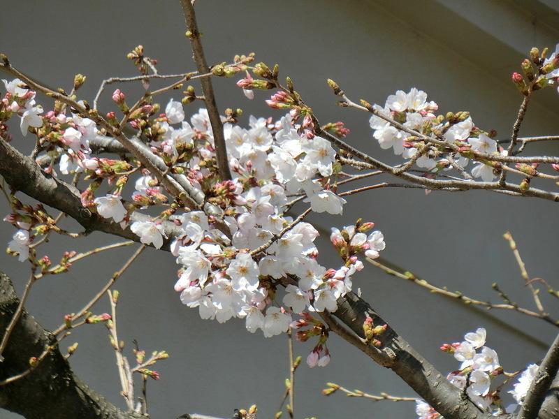 3月20日(水)お彼岸お中日_d0278912_16263759.jpg