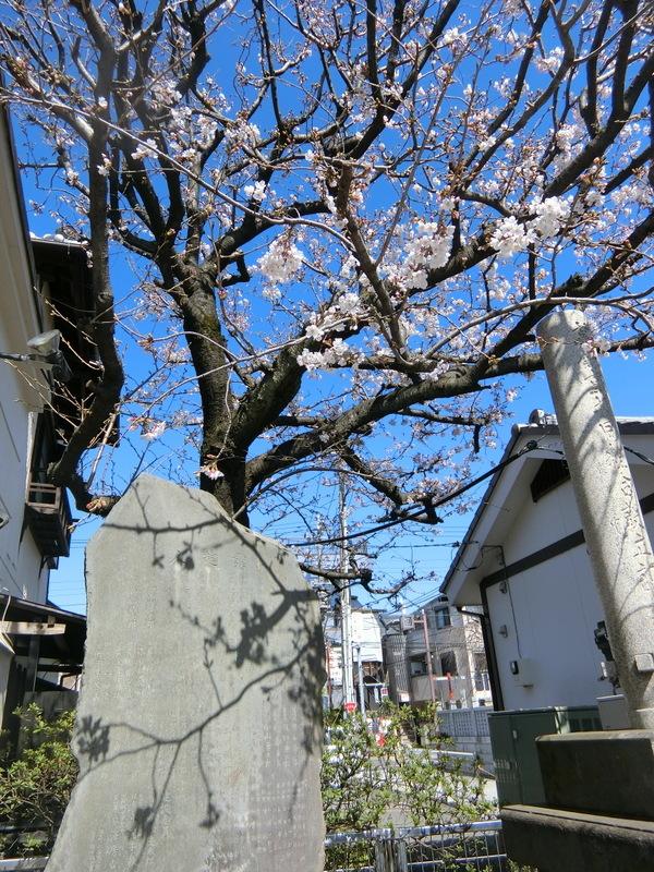 3月20日(水)お彼岸お中日_d0278912_16264781.jpg