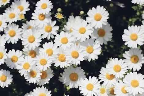 Margherita マルゲリータの花言葉を_a0157813_17040210.jpg