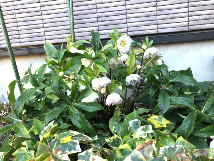 春分の日_f0067514_16550044.jpg