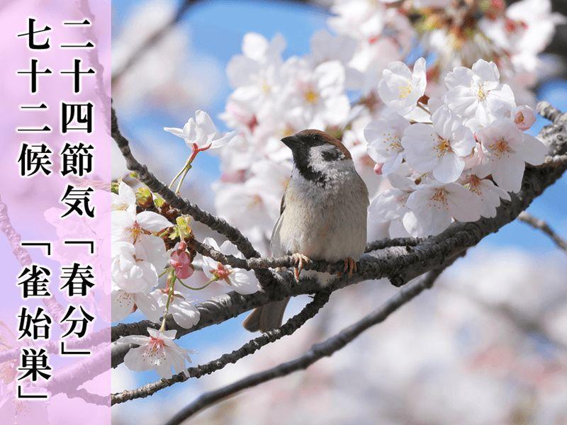 春分の日_c0025115_22141902.jpg