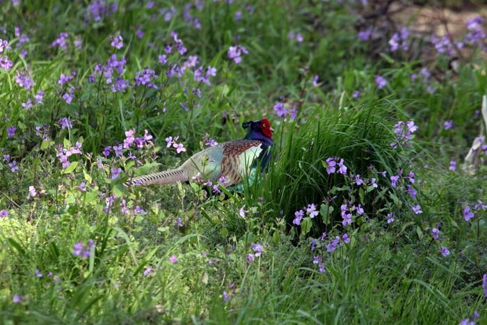 春分の日 風が強い中での探鳥_f0239515_1635926.jpg