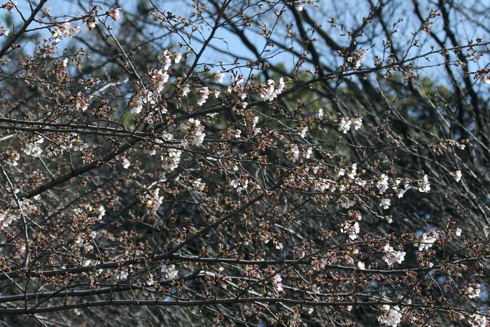 春分の日 風が強い中での探鳥_f0239515_1684583.jpg