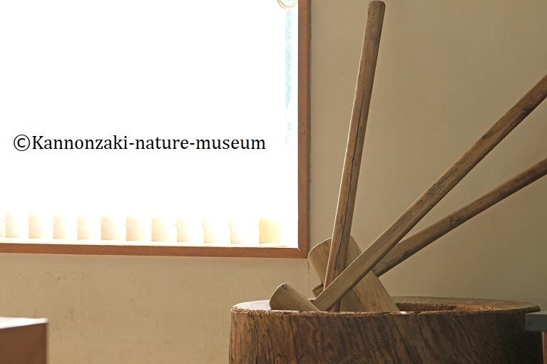 今日も爽やかな観音崎自然博物館(2020年3月)_a0386621_15004459.jpg