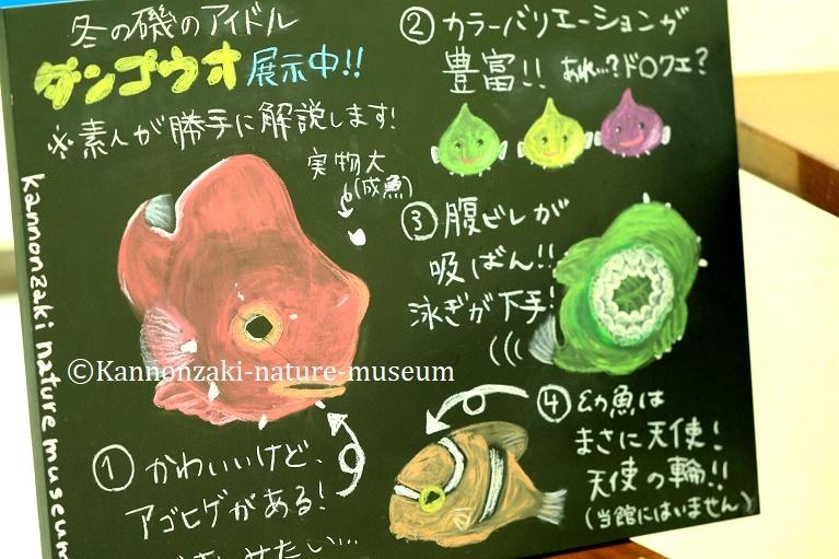 今日も爽やかな観音崎自然博物館(2020年3月)_a0386621_15005371.jpg