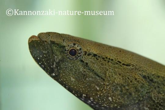 今日も爽やかな観音崎自然博物館(2020年3月)_a0386621_15010532.jpg