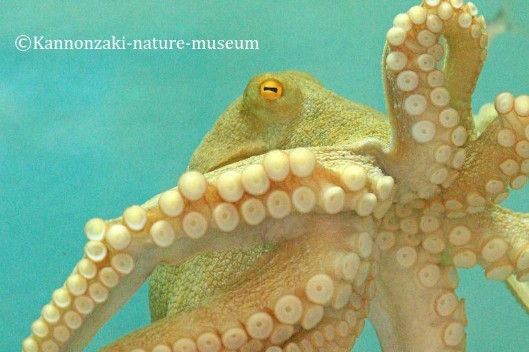 今日も爽やかな観音崎自然博物館(2020年3月)_a0386621_15011165.jpg