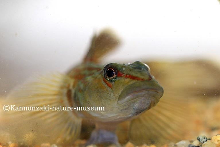 今日も爽やかな観音崎自然博物館(2020年3月)_a0386621_15012041.jpg