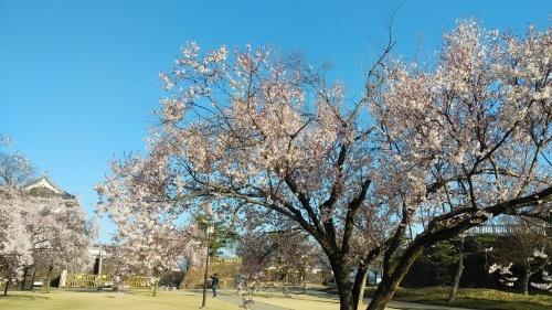 甲府城の桜の巻き(^^)_d0167225_10322615.jpg
