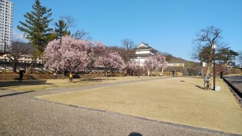 甲府城の桜の巻き(^^)_d0167225_10323879.jpg