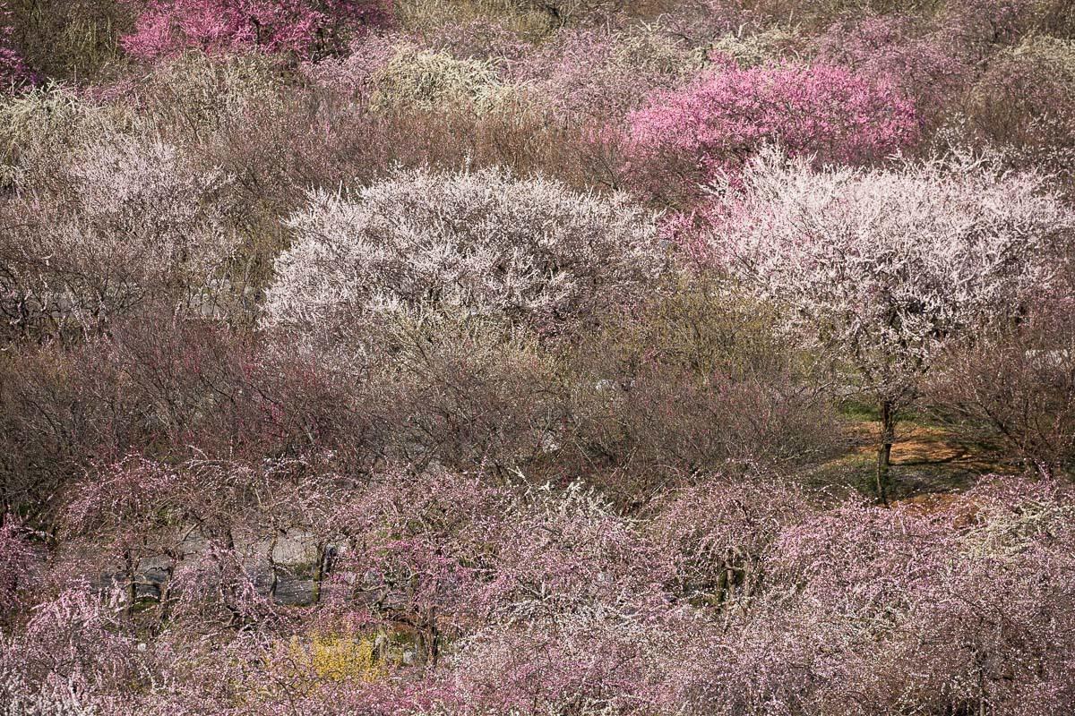 春色模様_e0413735_15290700.jpg
