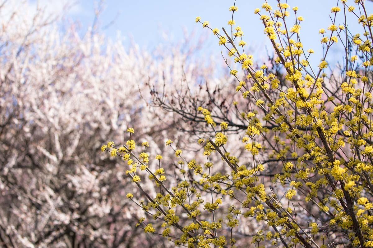 春色模様_e0413735_15291903.jpg