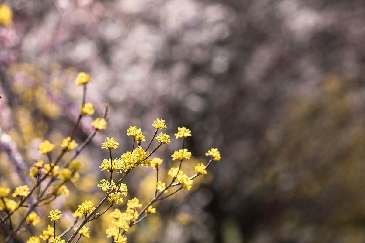春色模様_e0413735_15292522.jpg