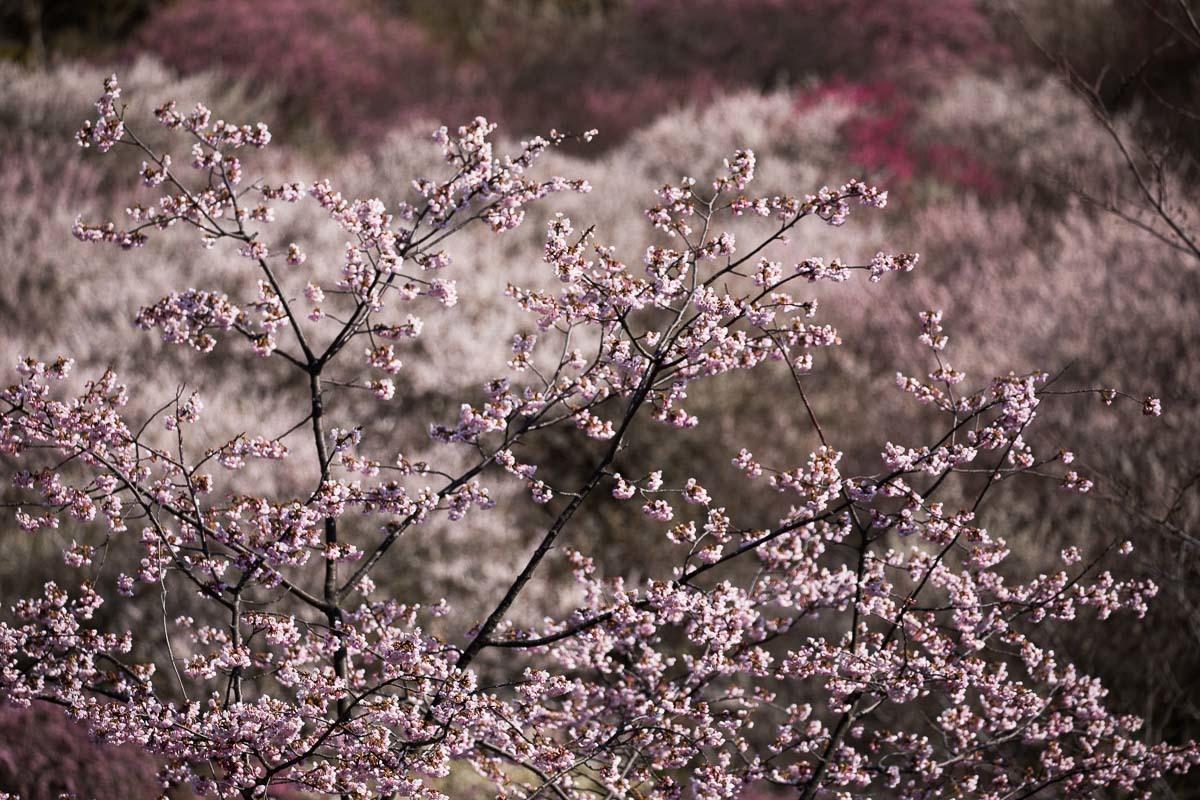春色模様_e0413735_15293070.jpg