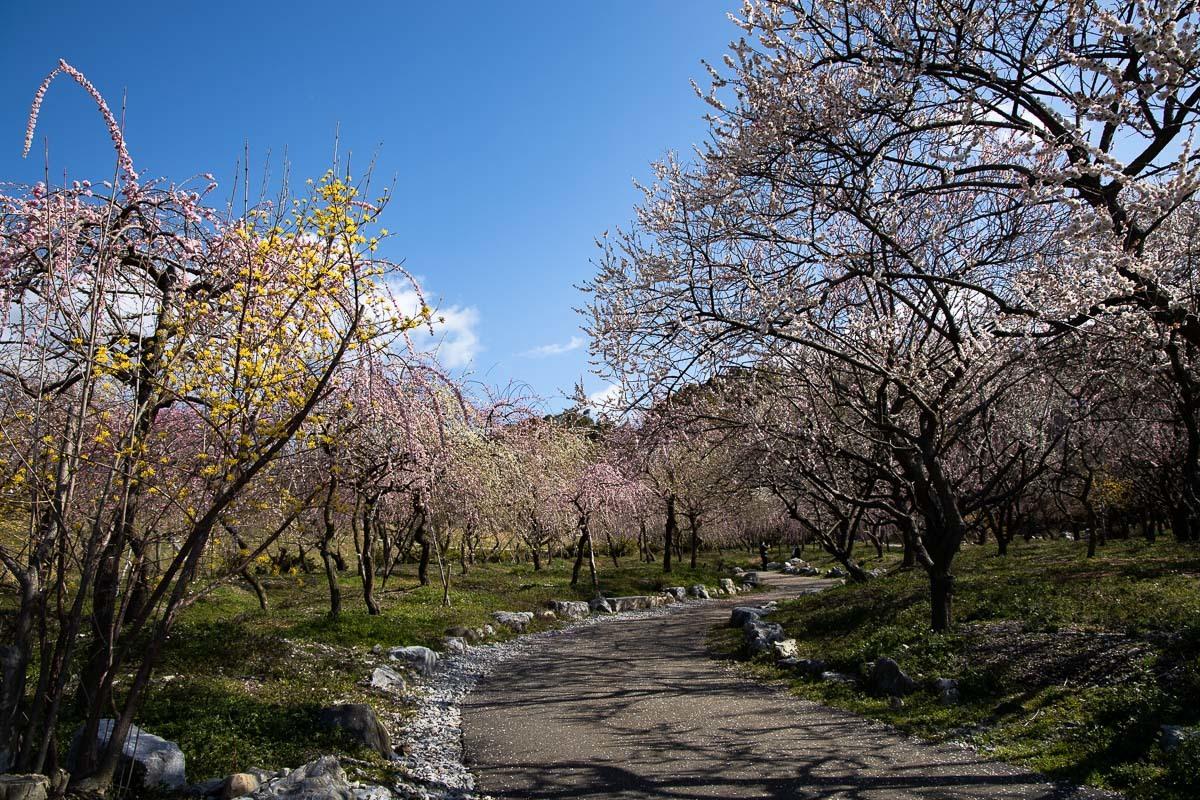 春色模様_e0413735_15293449.jpg