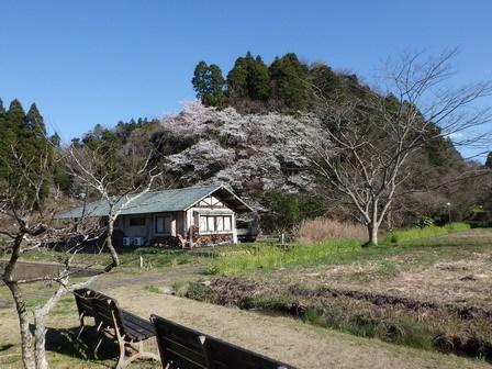 春分の日、ソメイヨシノ開花_a0123836_16414257.jpg