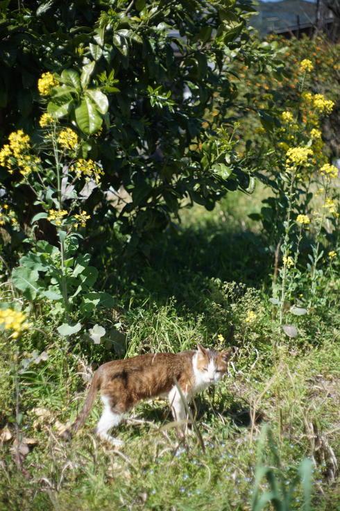 菜ノハナの花咲く畑で #3_b0060239_14440542.jpg