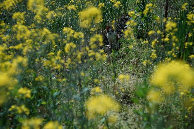 菜ノハナの花咲く畑で #3_b0060239_14451463.jpg