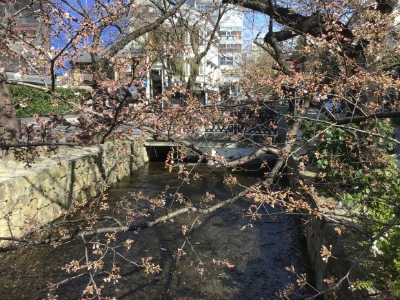 桜咲く、木屋町高瀬川。_e0230141_10462842.jpeg