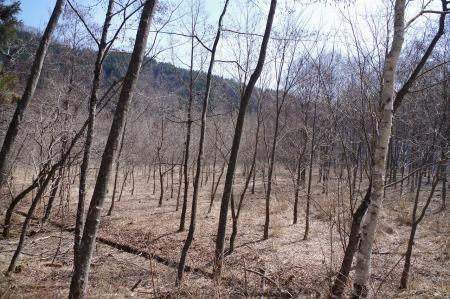 松川入財産区 樹を見に行ってきました。_f0114346_07065167.jpg