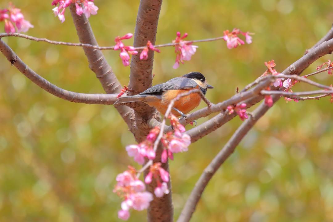 花に鳥 3/19_e0403850_20522761.jpg