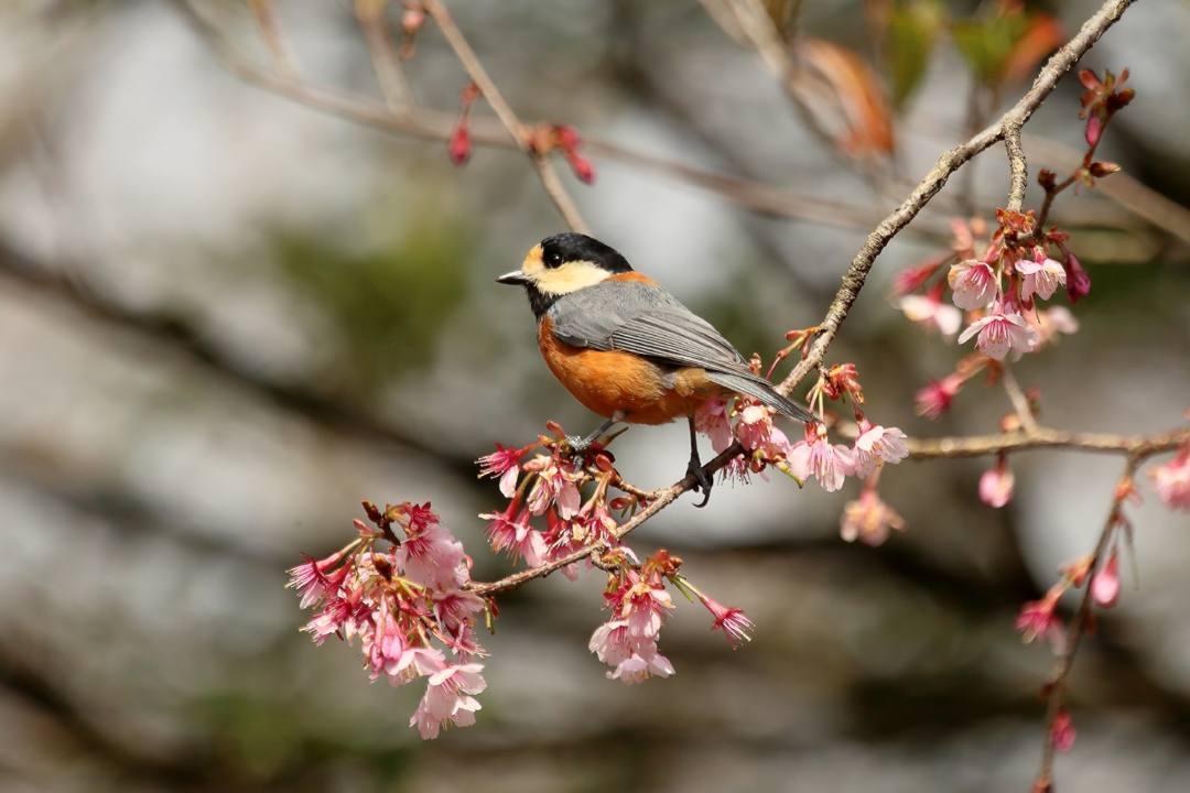 花に鳥 3/19_e0403850_20523230.jpg