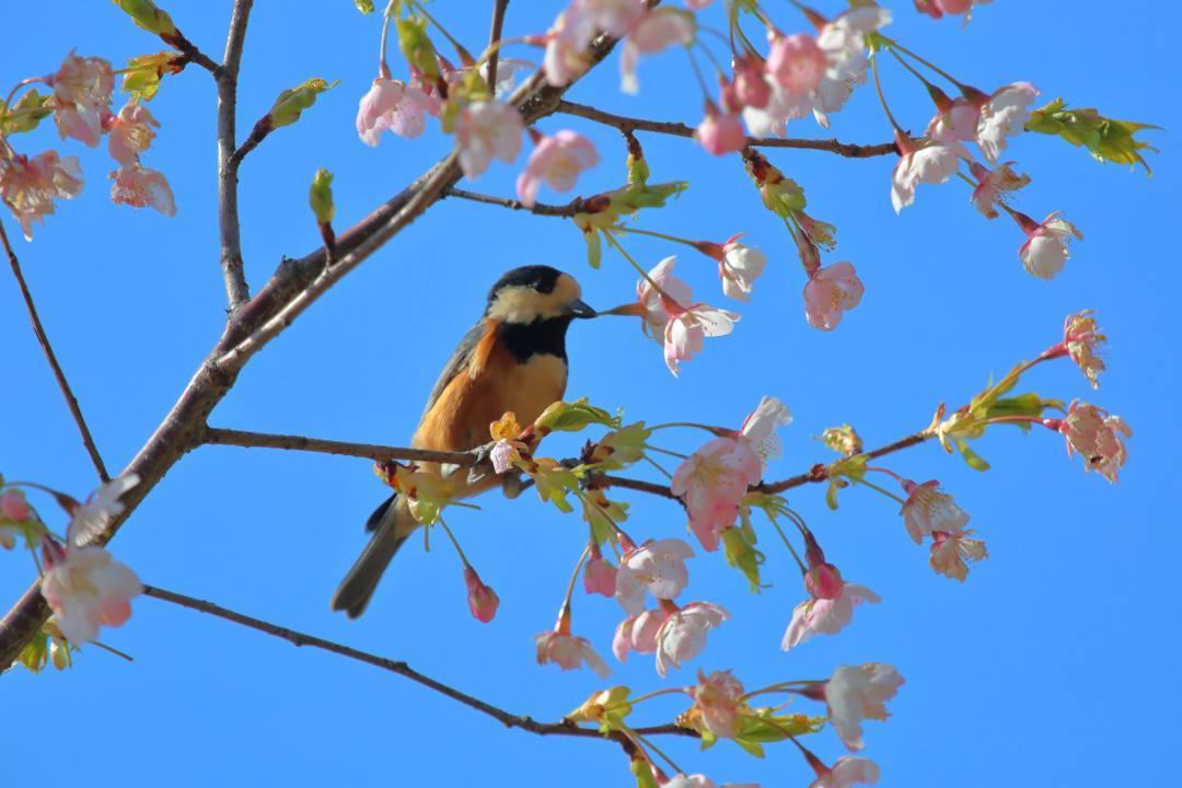 花に鳥 3/19_e0403850_20523611.jpg