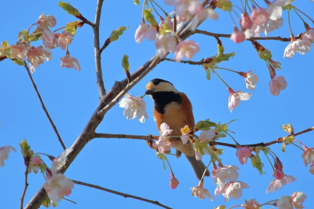 花に鳥 3/19_e0403850_20524166.jpg