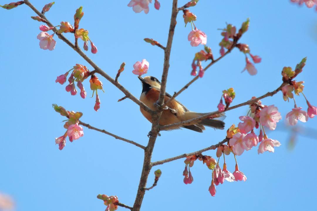 花に鳥 3/19_e0403850_20524876.jpg