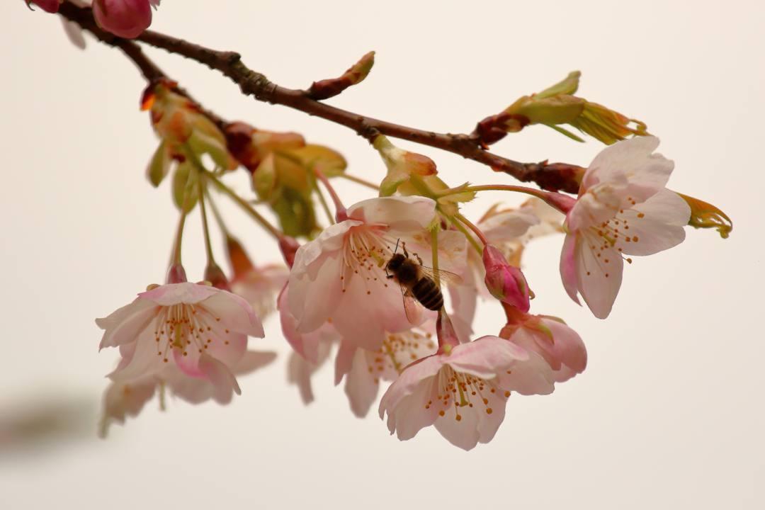 花に鳥 3/19_e0403850_20530134.jpg