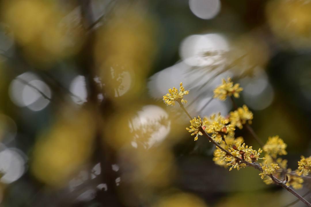 花に鳥 3/19_e0403850_20532251.jpg