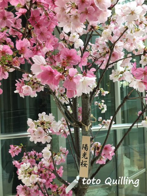 春の便り_a0335352_11513402.jpg
