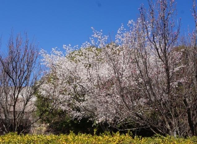 春ですね〜🌸_a0201257_17244793.jpeg