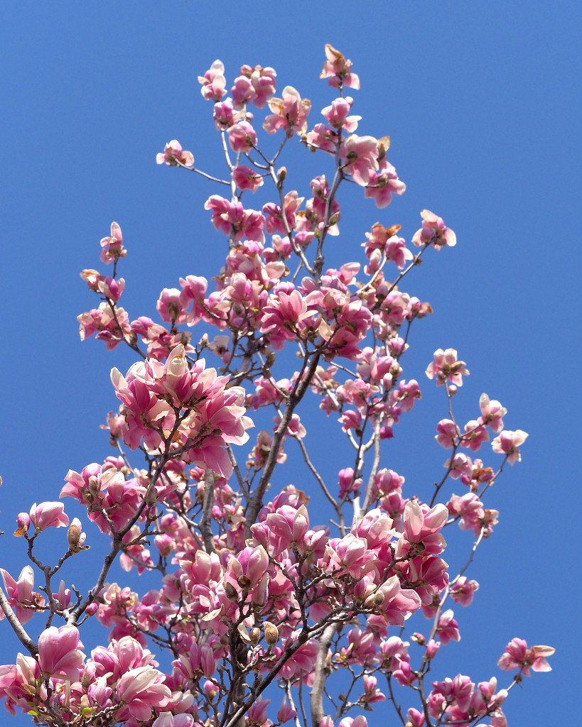 春爛漫のガーデンで 花々_c0305565_17373579.jpg