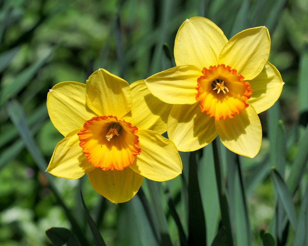 春爛漫のガーデンで 花々_c0305565_17383499.jpg