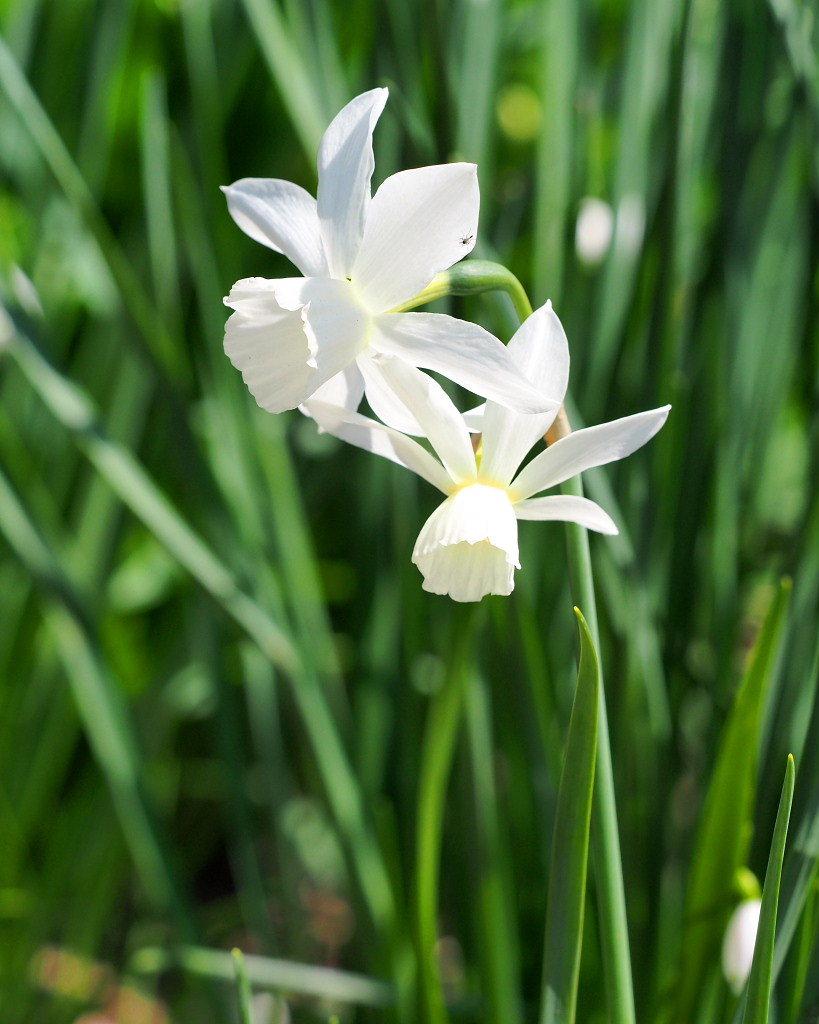 春爛漫のガーデンで 花々_c0305565_17385566.jpg