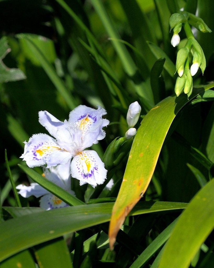 春爛漫のガーデンで 花々_c0305565_17391206.jpg