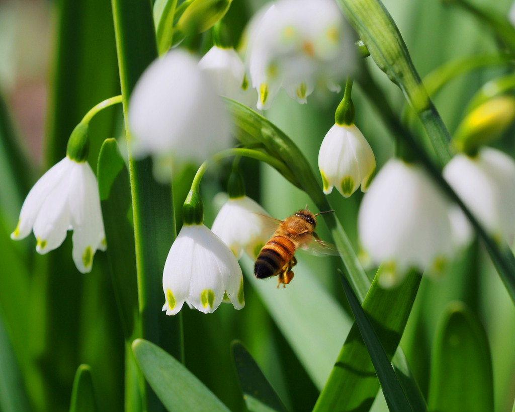 春爛漫のガーデンで 花々_c0305565_17395223.jpg