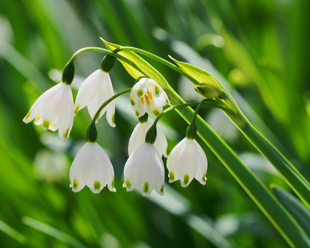 春爛漫のガーデンで 花々_c0305565_17400217.jpg